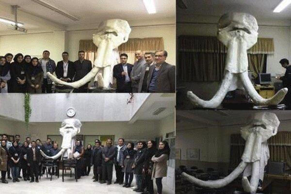 بازسازی جمجمه فسیل 2 میلیون ساله در زنجان