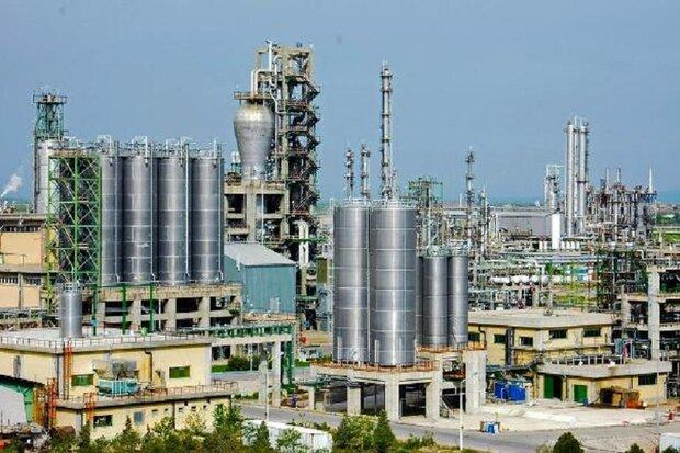 محصول مورد احتیاج صنایع شیمیایی فراوری و صادر شد