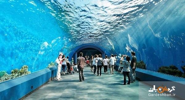 معرفی آکواریوم دنیا زیر آب پاتایا در تایلند