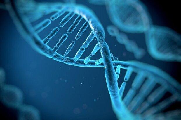 جایزه ملی ژنتیک ایران به بنیانگذار بنیاد ژنتیک دامغان اهدا شد